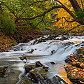 The Still River Print by Bill  Wakeley