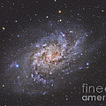 The Triangulum Galaxy Poster by Reinhold Wittich