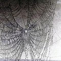The Web We Weave Poster by Margaret Hamilton