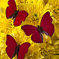 Three Red Butterflys Print by Garry Gay