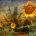 Three Sunflowers Poster by Adrian Evans