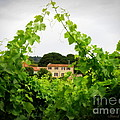 Through the Vines Print by Lainie Wrightson