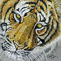 Tiger Painting Print by Michelle Wrighton