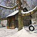 Tire Swing Shed Print by Timothy Flanigan
