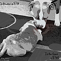 To Know A Pit Is To Love Print by Bobbee Rickard