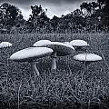 Toadstools-Black and White Print by Douglas Barnard