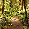 Trail through the Rainforest Poster by Carol Groenen
