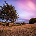 tree at sunset Print by John Farnan
