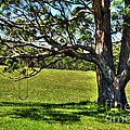 Tree with a Swing Print by Kaye Menner
