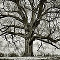Tree with bench Print by Greg Ahrens