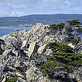 Trees Amidst the Cliffs in California's Point Lobos State Natural Reserve Print by Bruce Gourley