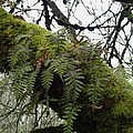Trees and Ferns and Moss Ecosystem Poster by Lizbeth Bostrom