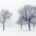 Trees in winter fog Poster by Elena Elisseeva