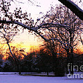 Trees in Wintry Pennsylvania Twilight Print by Anna Lisa Yoder