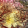Trees of the Four Seasons Poster by Kaye Menner