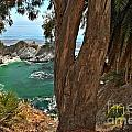 Trees Over McWay Falls Print by Adam Jewell