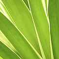 Tropical leaves Poster by Elena Elisseeva