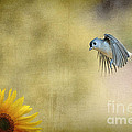 Tufted Titmouse flying over flower Poster by Dan Friend