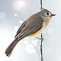Tufted Titmouse Twinkle Poster by Bill Tiepelman