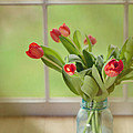 Tulips in Mason Jar Poster by Kay Pickens
