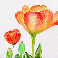 Tulips Orange and Red Print by Ashleigh Dyan Bayer