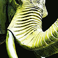 Tusk 1 - Dramatic Elephant Head Shot Art Print by Sharon Cummings