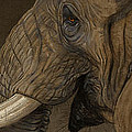Tusker Print by Aaron Blaise