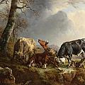 Two bulls defend against a cow attacked by wolves Poster by Jacques Raymond Brascassat
