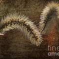 Two Grass Flowers Print by Heiko Koehrer-Wagner