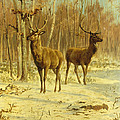 Two Stags in a Clearing in Winter Print by Rosa Bonheur