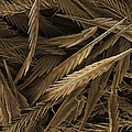 Urticating Hairs of a Tarantula Print by Science Photo Library