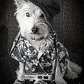 Vacation Dog with camera and Hawaiian shirt Poster by Edward Fielding