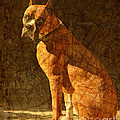 Vermeer's Dog Poster by Judy Wood