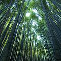 Vertical Bamboo Forest by Aaron S Bedell