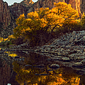 Vertical fall color reflections Print by Dave Dilli