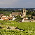 Vineyard and village of Pommard. Cote d'Or. Route des grands crus. Burgundy. France. Europe Poster by BERNARD JAUBERT