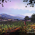VINEYARD NAPA SONOMA Print by Robert Foster