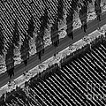 Vineyards from Hot Air Balloon Poster by Bob Phillips