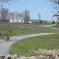 Vineyards in VA - 12122 Poster by DC Photographer