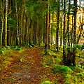 Walking In A Scottish Highland Wood Print by Mark E Tisdale