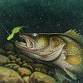 Walleye and Crank bait Print by Jon Q Wright
