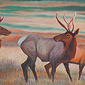 Wapiti  in Sunset Glow Poster by Anastasia  Ealy