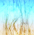 Water Grass - Outer Banks Print by Dan Carmichael