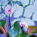 Water Lily II Poster by Ann Johndro-Collins