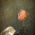 Water Maple Print by Michelle Calkins