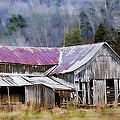 Weathered Barn Print by Kathy Jennings