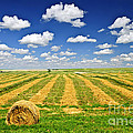 Wheat farm field and hay bales at harvest in Saskatchewan Print by Elena Elisseeva