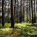 WHEN the FOREST BECKONS Print by KAREN WILES
