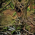 where the ents are Print by Angel  Tarantella
