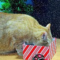 Whiskey's Present Print by Diana Angstadt